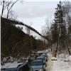 Свадебные кортежи атаковали подъезды к«Столбам»
