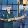 Редкий полутораметровый крокодил прописался вкрасноярском музее