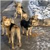 «Муж прыгал из окна, чтобы спасти»: бродячие собаки напали накрасноярскую школьницу