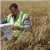 Красноярский край впервые экспортирует пшеницу вКитай