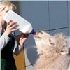 Верблюжонка из«Роева ручья» предлагают назвать Мороженкой (видео)