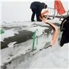 Иззаметенной снегом тундры вывезли крылья американского самолета «Дуглас»