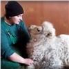 Юную красноярскую верблюдицу назвали вчесть растения