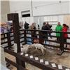 ВКрасноярске открылась масштабная выставка-ярмарка «Сибирская дача» вМВДЦ «Сибирь»