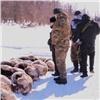 «Вооружены дозубов»: браконьеры убили еще около сотни диких северных оленей (видео)