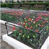 «Много романтиков рядом живет»: красноярцы удивились цветам вклетках