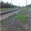 Пожары выгнали медвежат изтайги: детеныш погиб под поездом