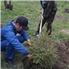 Сотни деревьев икустарников высадят вкрасноярских дворах