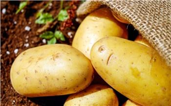 «Сажаем картофель поформуле!»: полезные советы ученого