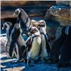Практичные пингвины поспорили зажилплощадь влетнем вольере сбассейном