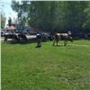 ВЛесосибирске надетской площадке гуляют коровы: жители возмущены