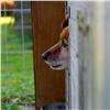 Заполгода наотлов безнадзорных собак потратят 2,5 млн рублей