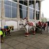 Конный прокат не вернется в центр Красноярска