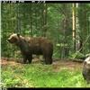 Медведи снова пришли всамые популярные места «Столбов»