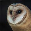 Пугающая людей хищная птица поселилась вкрасноярском зоопарке