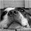 Подрядчику небудут платить заотлов щенков вместо взрослых собак