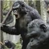 Красноярцев наотдыхе покусали обезьяны