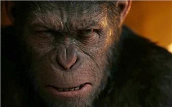 Боевые обезьяны, жизнь зарешеткой иужасы по-деревенски: кино навыходных