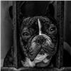 Предпринимателя заподозрили в мошенничестве сотловом собак