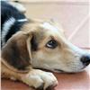 Скандального подрядчика недопустили доотлова собак вКрасноярске