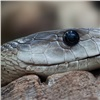 Змея приползла на территорию красноярского садика