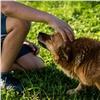 В Минусинске спасатели вызволили из колодца собаку