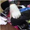 Иностранца будут судить заботинки сгероином (видео)