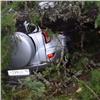 В природном парке «Ергаки» кедр упал на автомобили туристов