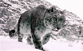 «Выследить браконьера— тяжелая работа»: чем живет Саяно-Шушенский заповедник