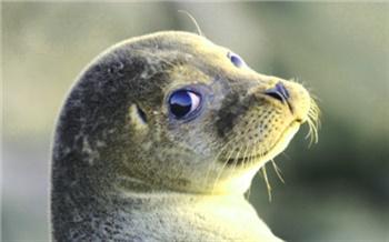 Скандалы недели: Тюлени, гусеницы иколёса