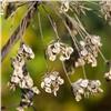 Красноярцам раскроют тайны семян
