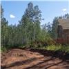 Под Красноярском вековой лес вырубают ради коттеджей