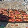 ВКрасноярске нашли опасные фрукты