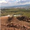 НаНиколаевской сопке вырубили лес под строительство трассы для фристайла
