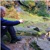 Живущая на«Столбах» лиса выманила еду утуристов истала героем видеоролика (видео)