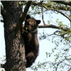 ВАчинском районе решили застрелить двух медведей