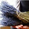 Крымскую лаванду и арабские травы можно купить наЯрмарке здоровья