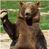 ВКрасноярском крае медведь ходит поулицам города