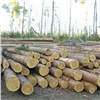 Бывший начальник обманом заставлял рабочих валить лес