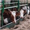 Красноярские аграрии познакомились сопытом томских товаропроизводителей