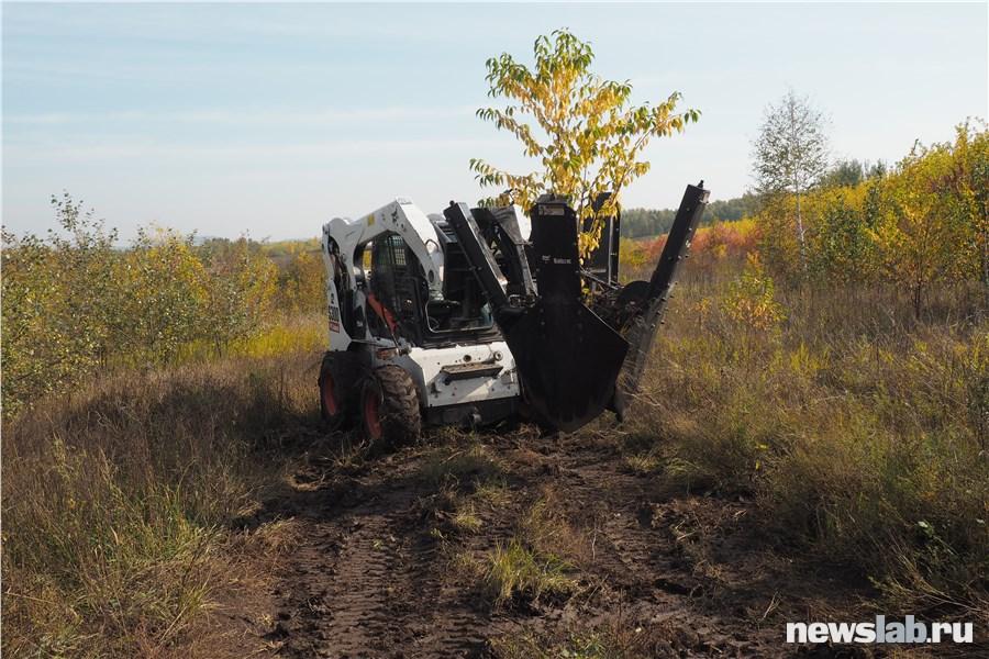 Дерево осенью картинки красноярск