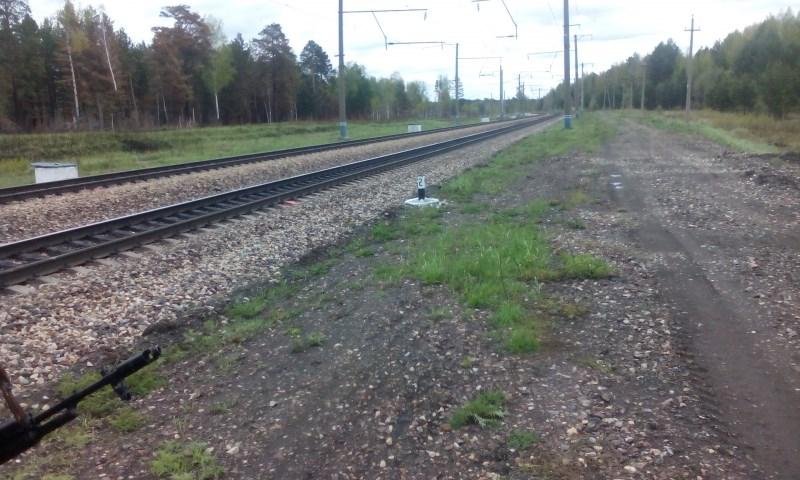 Спасавшийся отпожара медвежонок умер под поездом вКрасноярском крае