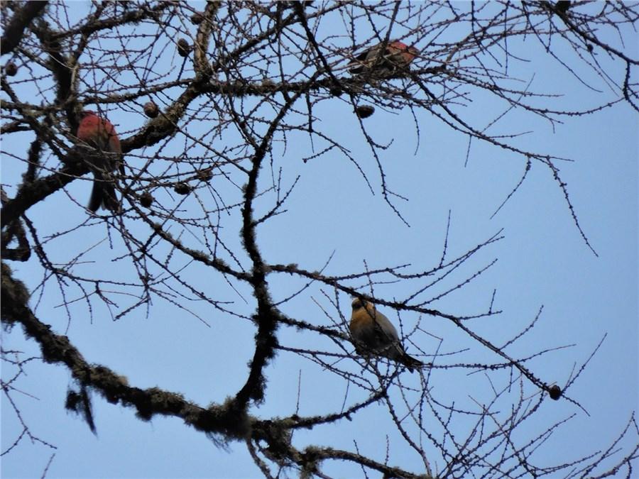 Вкрасноярском заповеднике «Столбы» увидели редкую птичку