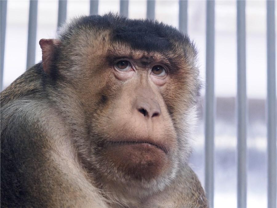 Долгожитель изкрасноярского зоопарка лапундер Тасик обозначил 21 день рождения