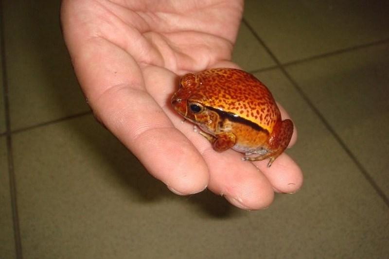 Что едят лягушата в домашних условиях