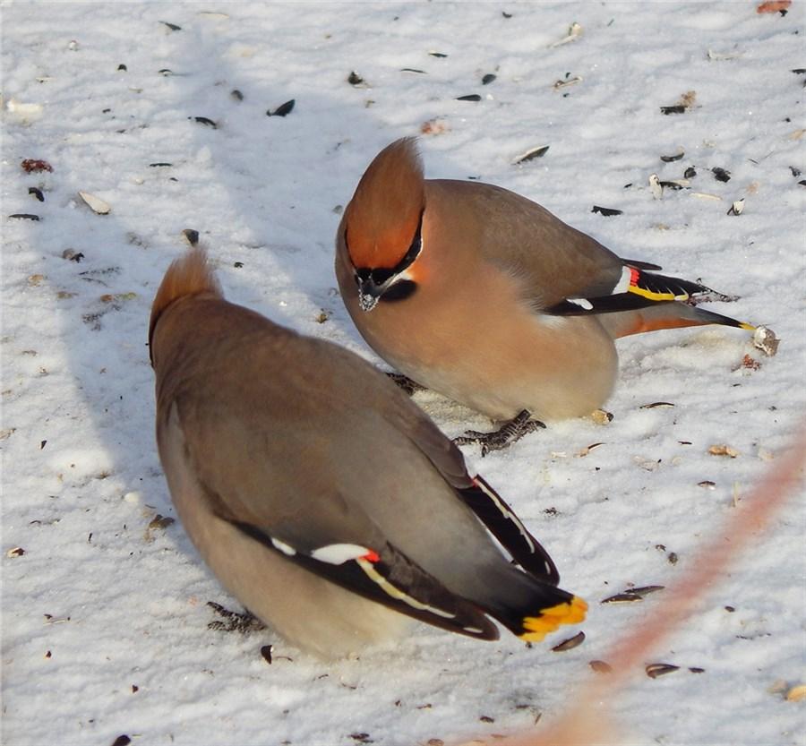 понять, насколько птицы красноярска фото и названия микроскоп