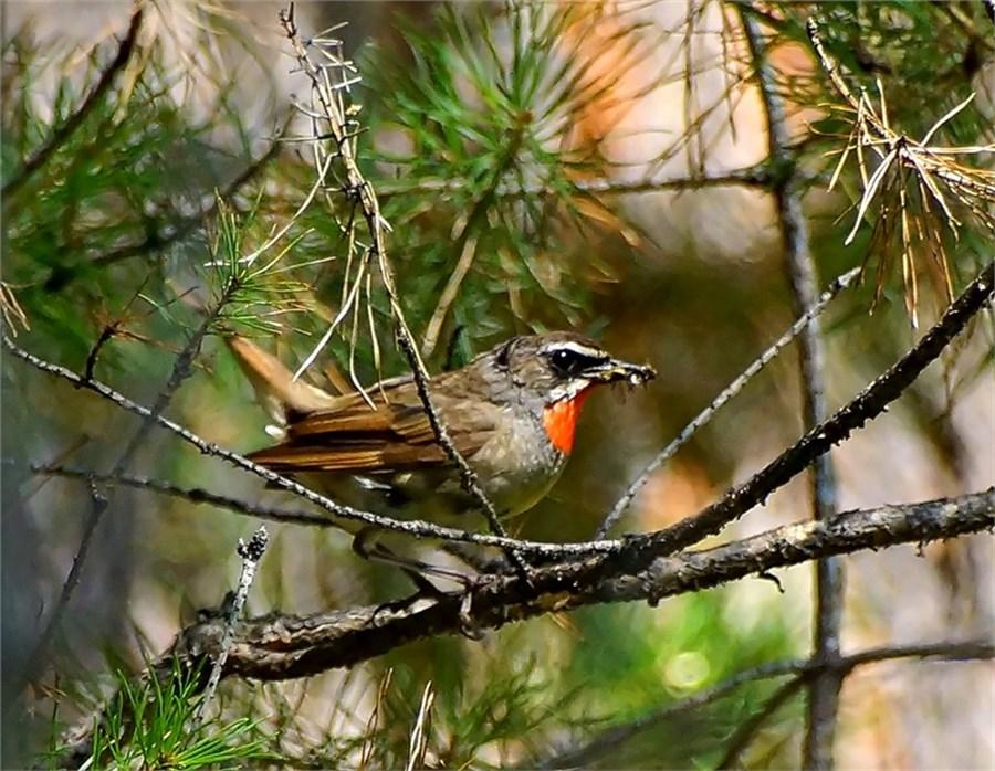 вид птицы красноярска фото и названия белка, оживший тест