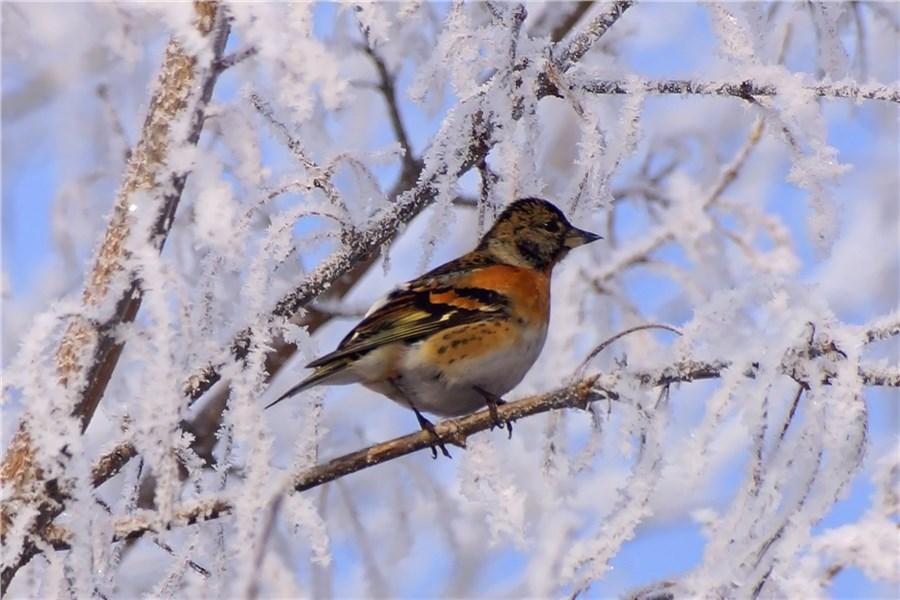 птицы красноярска фото и названия данном